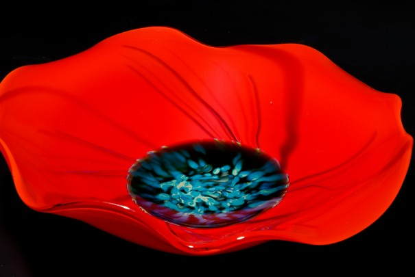 Poppies at Coutts Bank Image